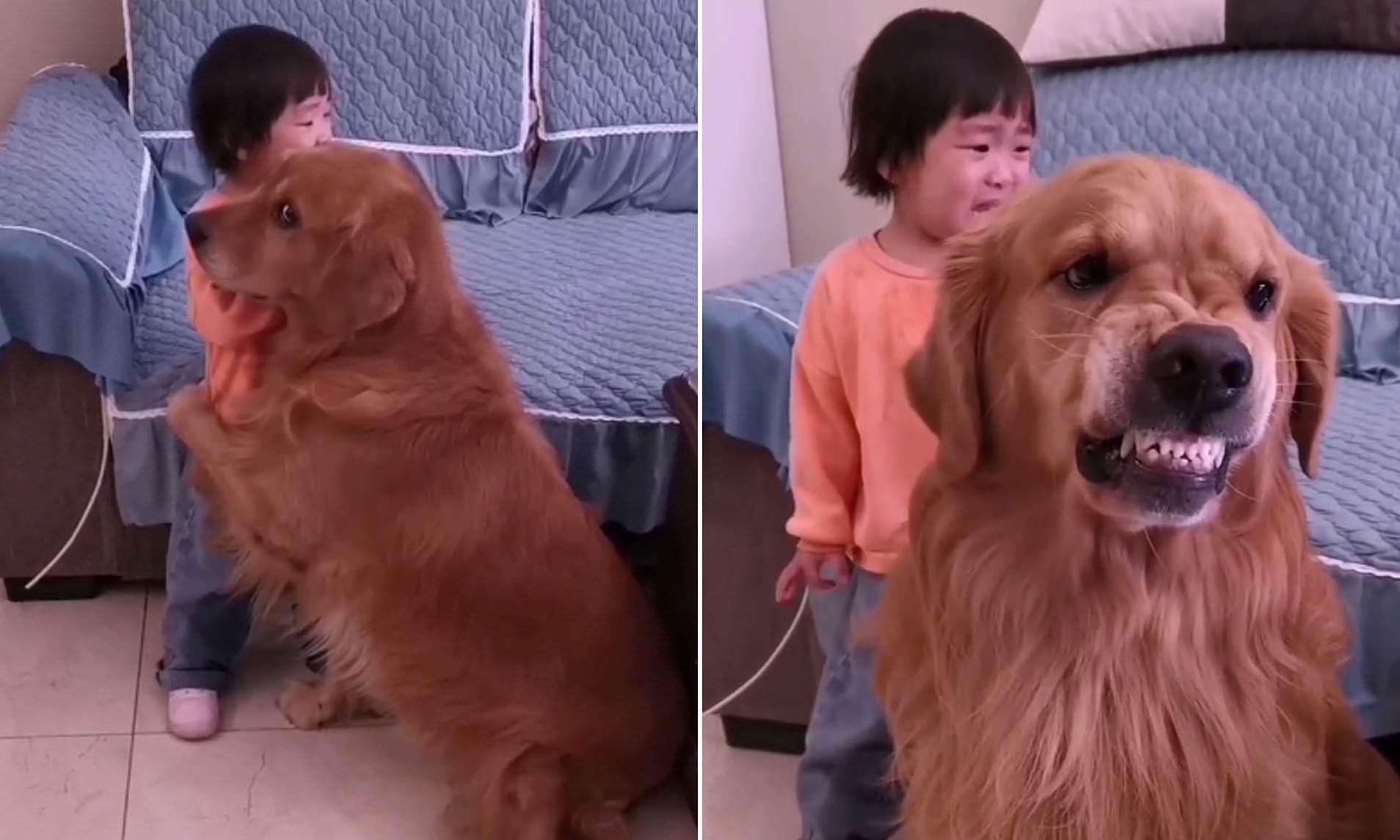 Prince Hisahito of Akishino and a dog looking at the camera