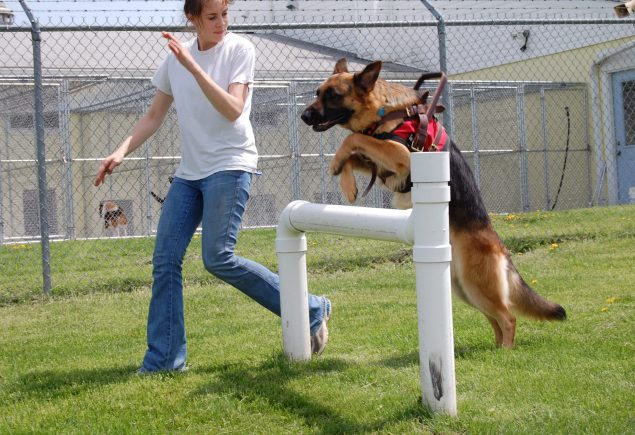 A person and a dog in a fenced in area