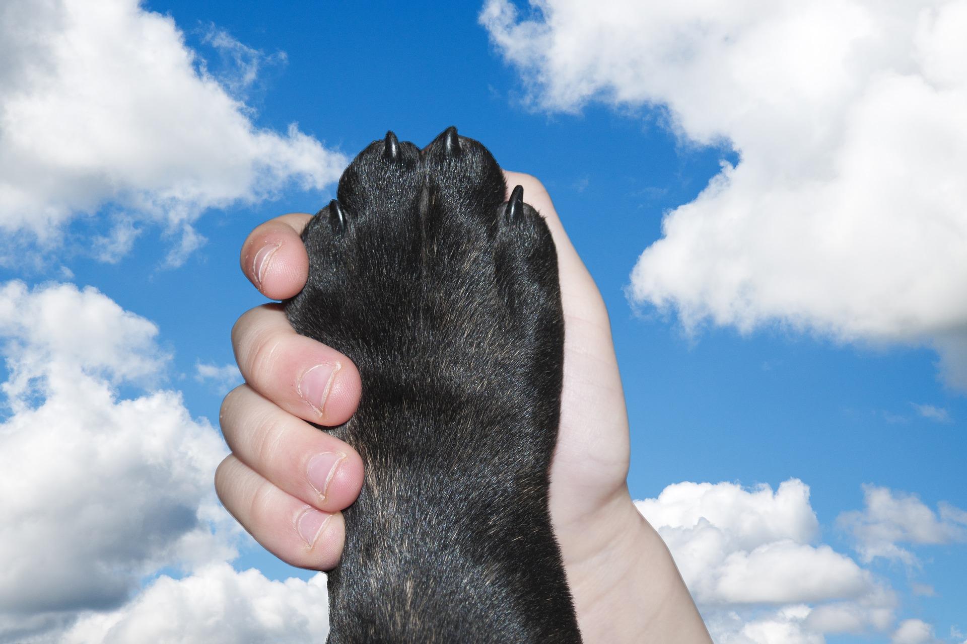 Dog, Paw, Hand, Love, Friendship, Friends, HoldingDog Paw Hand Love Friendship Friends Holding